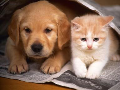 Comitê de Proteção Animal segue com campanha da ração