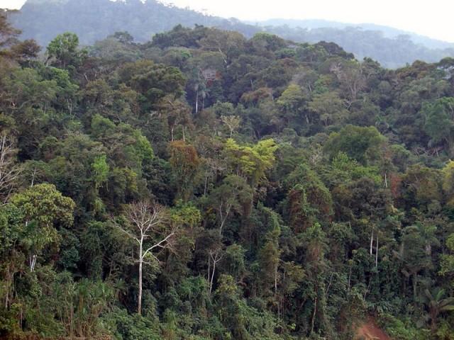 Desmatamento da Amazônia aumentou 15% no acumulado em 12 meses