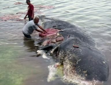 Equipamentos de pesca representam 10% do plástico nos oceanos