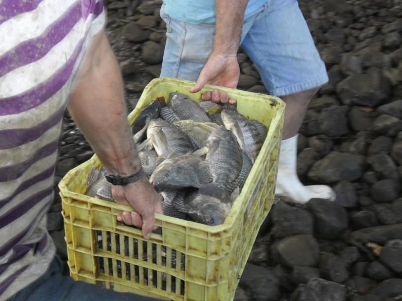 Sétima Semana do Peixe inicia-se nesta segunda-feira(06)